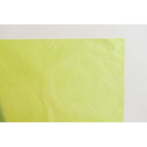 Luxury Apple Tissue Paper 500x750mm (1 pack of 80 sheets)